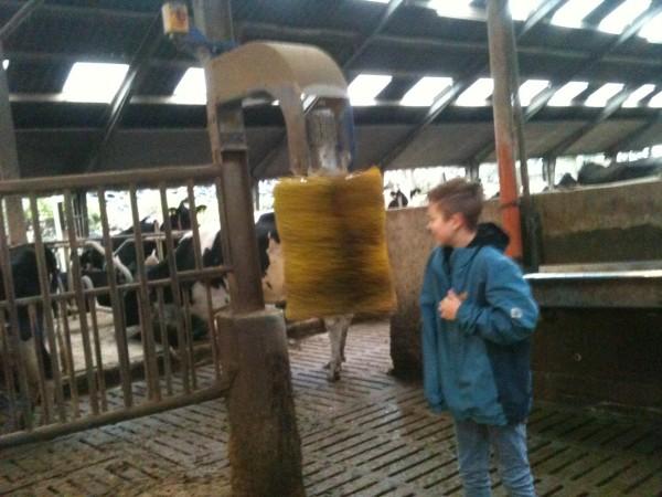 Ein Roboter macht die Kühe sauber (nicht nur sie :)).